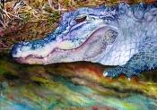 Wakulla Gator